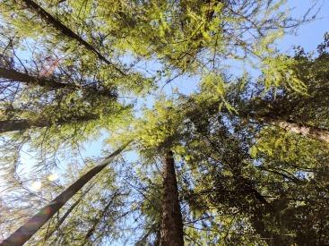 tree-207467_960_720.jpg